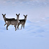 Deer surrounded by snow