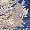 frosty branch background